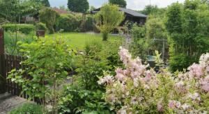 Liebevoll gepflegt und gehegt sind die 300 Parzellen des 1974 gegründeten Kleingartenvereins Nord-Ost 74.