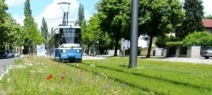 Der Bezirksausschuss Bogenhausen fordert von der Münchner Verkehrsgesellschaft (MVG) darzulegen, mit welchen Maßnahmen eine Lärmminderung der Tramlinie St. Emmeram entlang der Cosimastraße erzielbar ist.