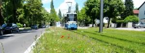 """Anwohner der Cosimastraße beschweren sich, können nachts nicht mehr ruhig schlafen. Doch die Straßenbahn nach St. Emmeram – als """"Flüstertram"""" bezeichnet, weil sie ein Rasengleisbett hat – hält laut Angaben der Stadtwerke München nach Lärm- und Erschütterungsmessungen die Grenzwerte ein."""