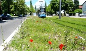 """Anwohner der Cosimastraße beschweren sich, können nachts nicht mehr ruhig schlafen. Doch die Straßenbahn nach St. Emmeram – als """"Flüstertram"""" bezeichnet, weil sie ein Rasengleisbett hat – hält angeblich die Lärmgrenzwerte ein."""