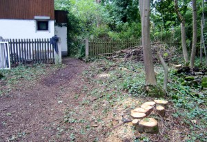 Gerodetes  privates Grundstück in Haar: Kaum ein Baum ist mehr übrig geblieben.   Foto: hgb