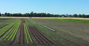 Felder, Wiesen Wege – überwiegend Landschaft pur – prägen heute das Gebiet entlang zwischen Daglfing, Englschalking und Johanneskirchen.    Foto: Planungsreferat