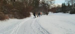 Winterliche Idylle im Westteil des Denninger Angers: Der Schnee auf den asphaltierten Wegen ist von Räumfahrzeugen platt gefahren, eine Eisschicht darunter macht einen Spaziergang zur Rutschpartie. Ohne Teer, auf Schotter, wäre dies nicht der Fall.     Foto: hgb