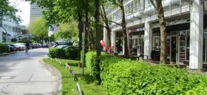 Fünf Bäume mit einem Stammumfang unter 80 Zentimeter, die direkt am Straßenrand vom Rosenkavalierplatz auf der Seite des Rewe-Markts stehen und die sich stark zur Fahrbahn neigen, werden gefällt. Dafür werden 16 weitere Senkrechtstellplätze eingerichtet.    Foto: hgb