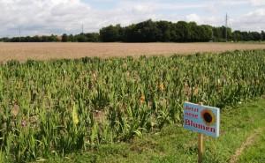 Feld, Wald, Wiesen und Blumen – kaum vorstellbar, dass die Flächen rund um Johanneskirchen einmal zubetoniert und asphaltiert sind.     Foto: hgb