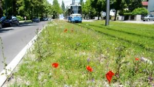 """Die Anwohner vor allem der Cosimastraße beklagen seit Jahren den Lärm der Tram St. Emmeram, fordern bislang vergeblich unter anderem eine Temporeduzierung. Nun versucht's der Bezirksausschuss auf die """"weiche"""" Tour, bittet die Stadt zwischen 22 und 7 Uhr Geschwindigkeit 50 km/h vorzuschreiben.     Foto: hgb"""