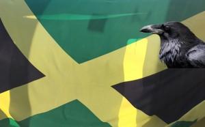 """Falten und Schatten in der Bogenhauser Jamaika-Koalition: Die CSU will den Schutz der Singvogelpopulation gegen Raben und Elstern im Stadtbezirk stärken, die Grünen verstiegen sich bei der Diskussion in eine """"Obergrenze für Raben"""".      Fotos: Tierwelt/hgb"""