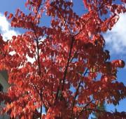 Bogenhausen im Herbst